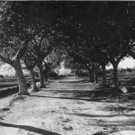 historia-camino-san-anton